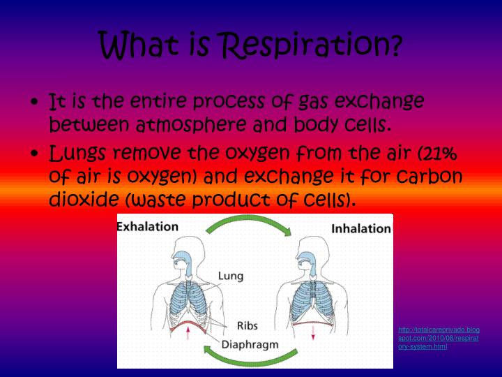 What is respiration