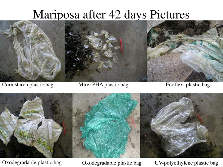 Mariposa after 42 days Pictures