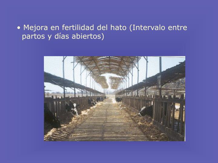 Mejora en fertilidad del hato (Intervalo entre