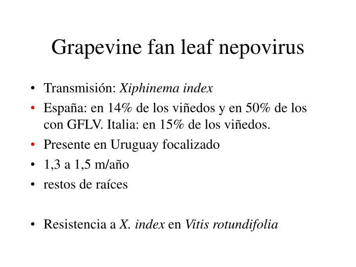 Grapevine fan leaf nepovirus