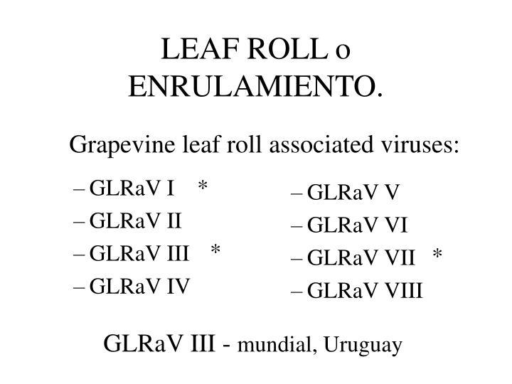 GLRaV I