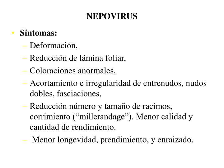 NEPOVIRUS