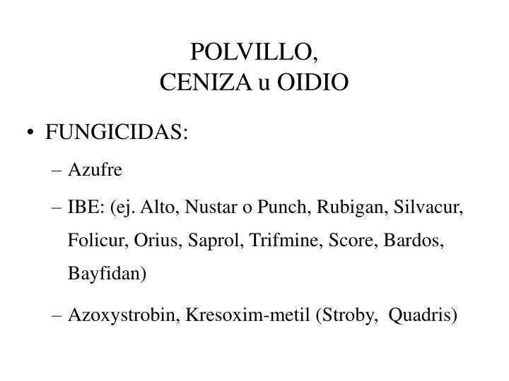 POLVILLO,