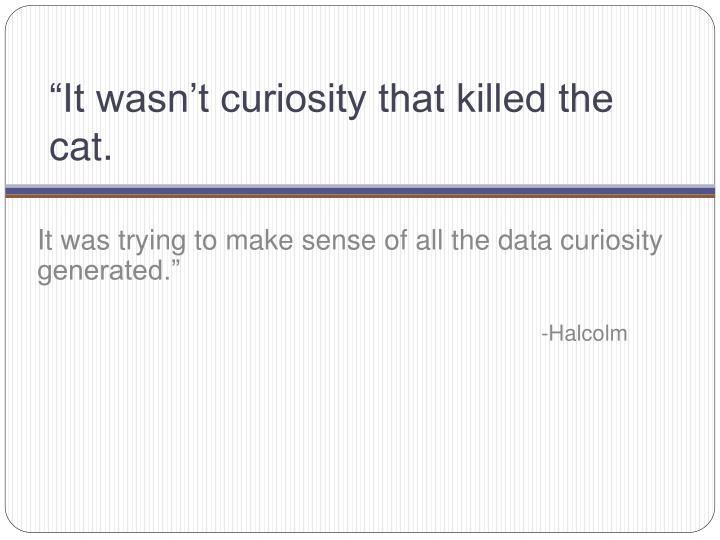 It wasn t curiosity that killed the cat