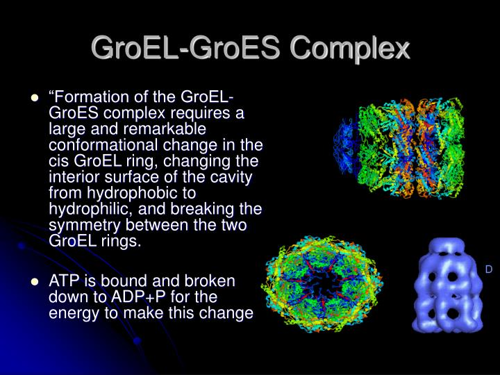 GroEL-GroES Complex