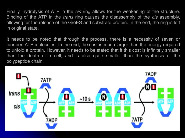 Finally, hydrolysis of ATP in the