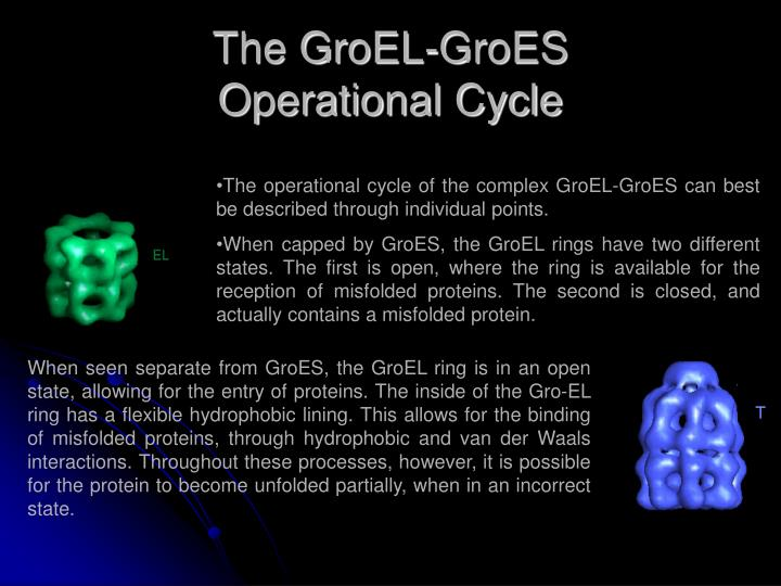 The GroEL-GroES