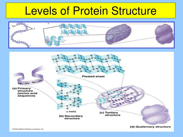 chapter 5 the structure and function 31 label the structure of a phospholipid to show the phosphate group, the glycerol, and the fatty acid chains also indicate hydrophobic and hydrophilic type of protein contractile, motor enzymatic defensive hormonal structural function movement selective acceleration of chemical reactions.