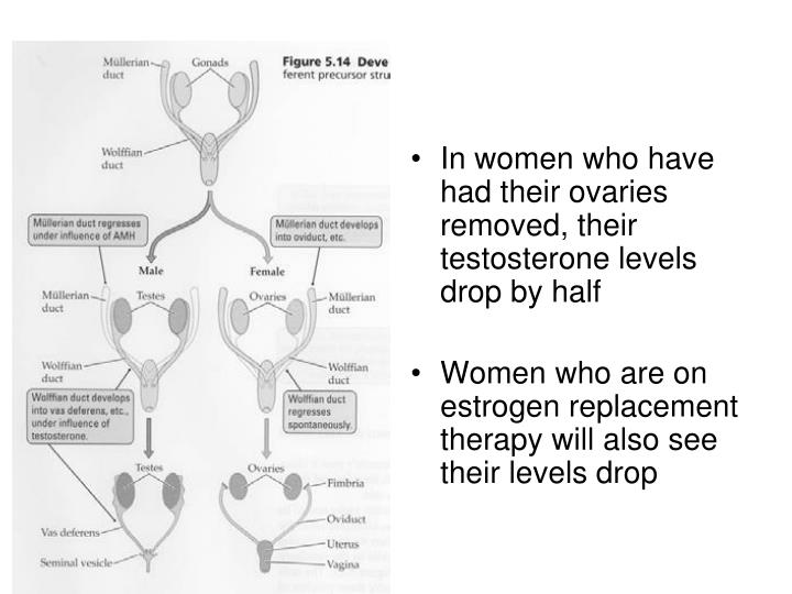 In women who have had their ovaries removed, their testosterone levels drop by half