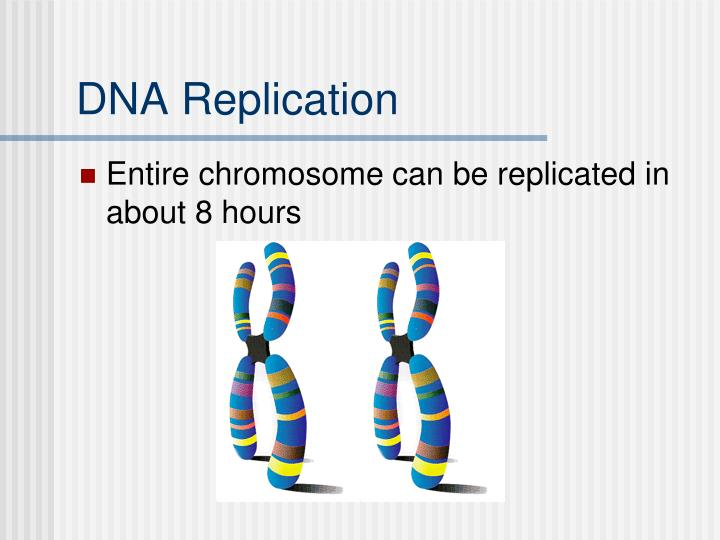 DNA Replication