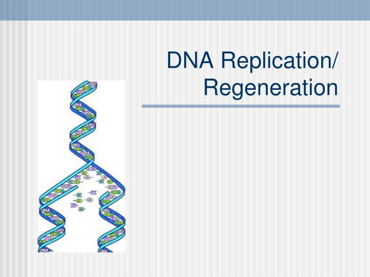 Dna replication regeneration