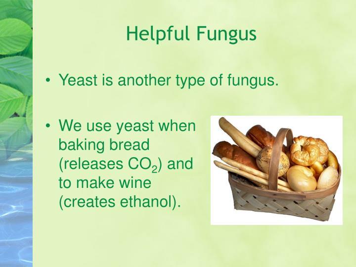 Helpful Fungus