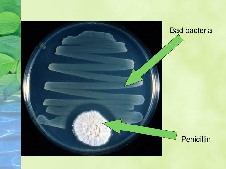 Bad bacteria