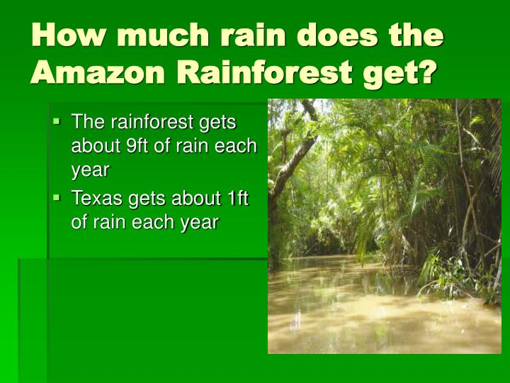 How much rain does the     Amazon Rainforest get?