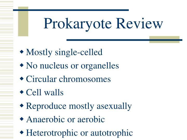 Prokaryote Review