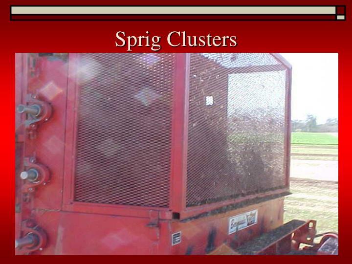 Sprig Clusters