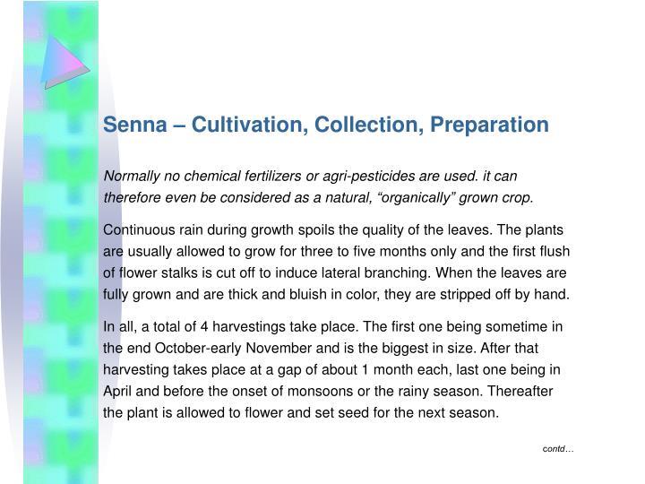 Senna – Cultivation, Collection, Preparation