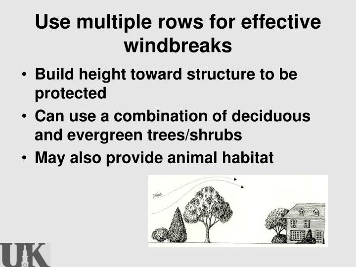 Use multiple rows for effective windbreaks