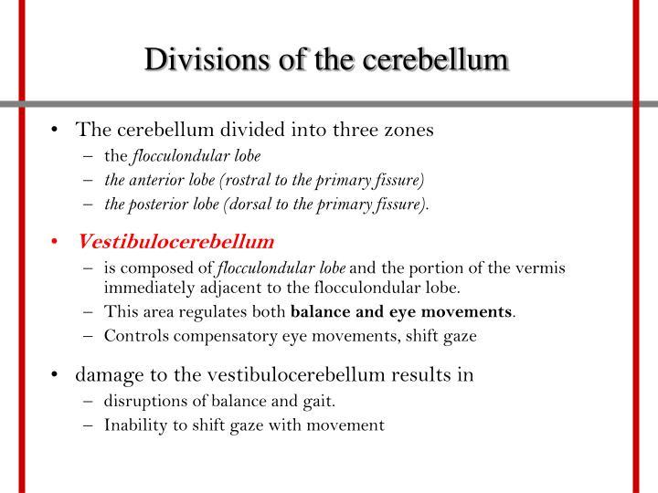 Divisions of the cerebellum