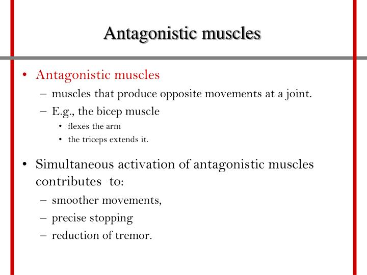 Antagonistic muscles
