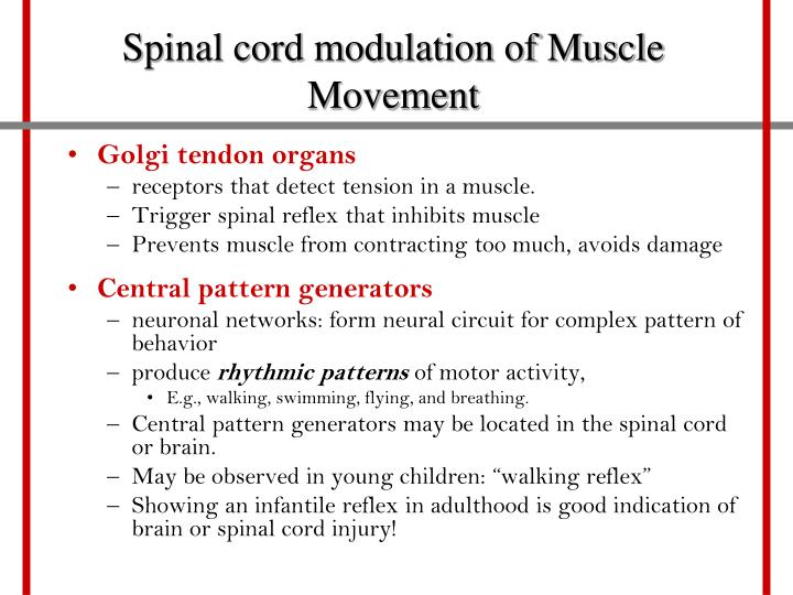 Spinal cord modulation of Muscle Movement