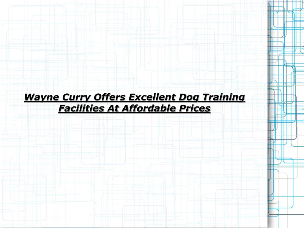 wayne curry offers excellent dog training facilities at affordable prices l.