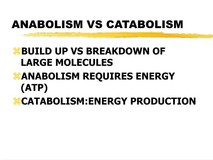 ANABOLISM VS CATABOLISM