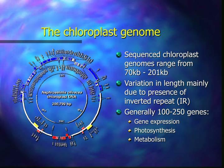 The chloroplast genome