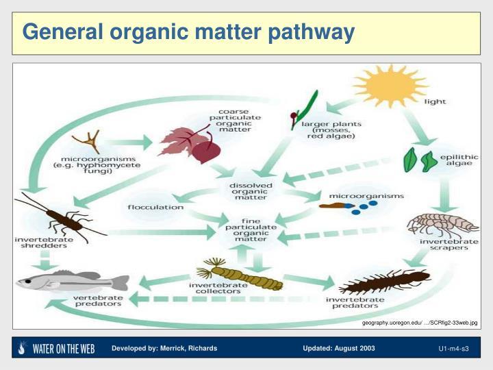 General organic matter pathway