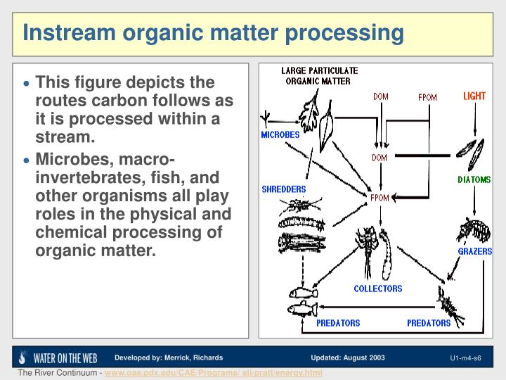 This figure depicts the routes carbon follows as it is processed within a stream.