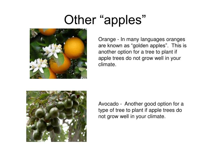 "Other ""apples"""