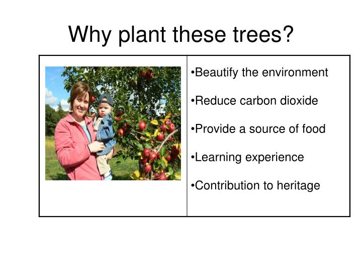 Why plant these trees?