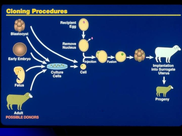 the process of human cloning