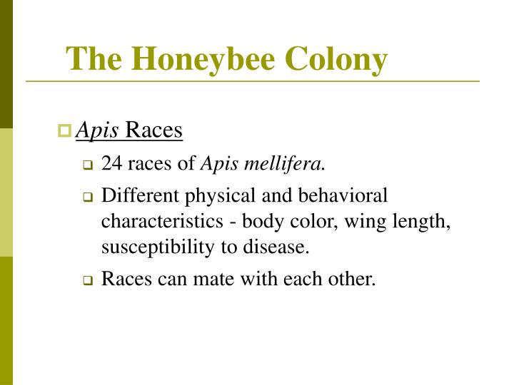 Ppt controlling africanized honey bees powerpoint presentation the honeybee colony altavistaventures Image collections