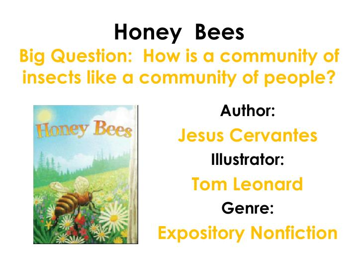 honey bees big question how is a community of insects like a community of people n.