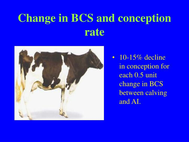 10-15% decline in conception for each 0.5 unit change in BCS between calving and AI.