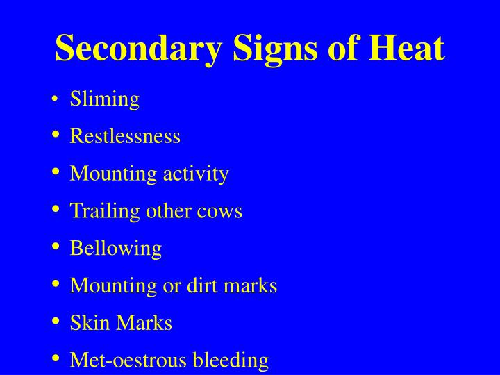 Secondary Signs of Heat