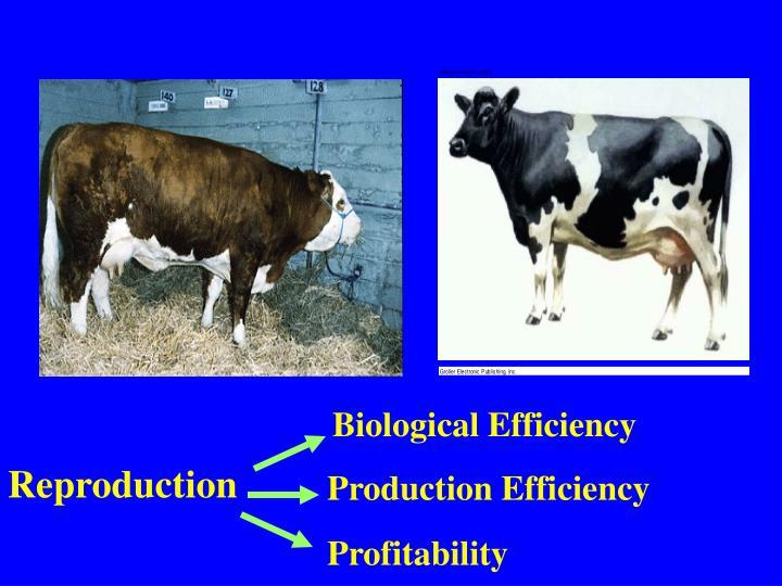 Biological Efficiency