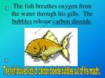 the fish breathes oxygen from the water through his gills the bubbles release carbon dioxide