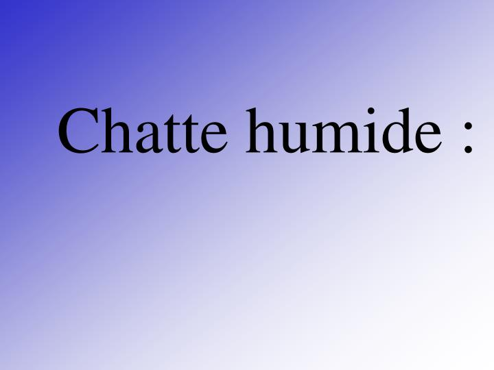 Chatte humide :