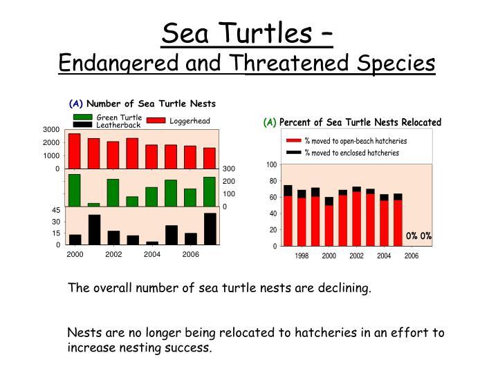 Sea Turtles –