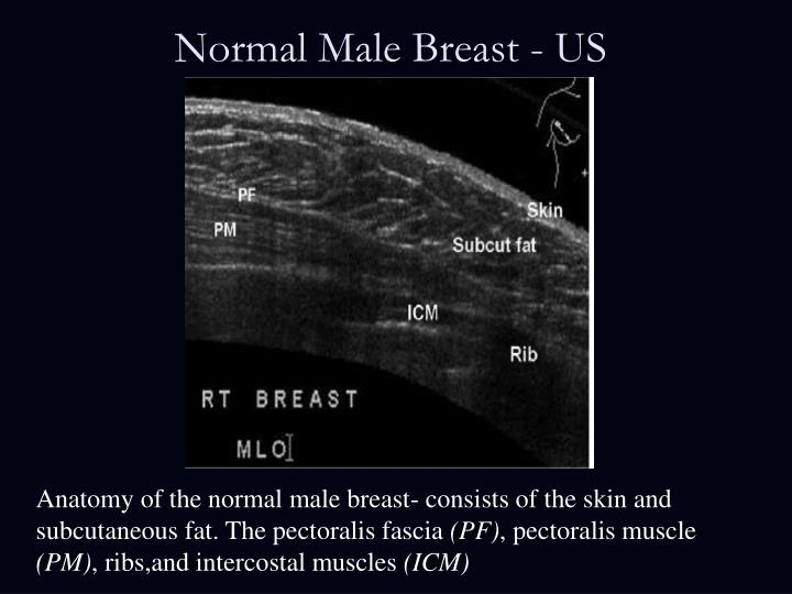 Normal Male Breast - US