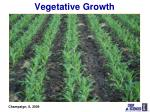 vegetative growth