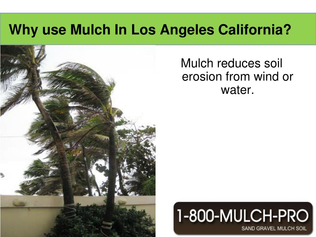 Mulch reduces soil erosion from wind or water.