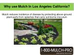 why use mulch in los angeles california6