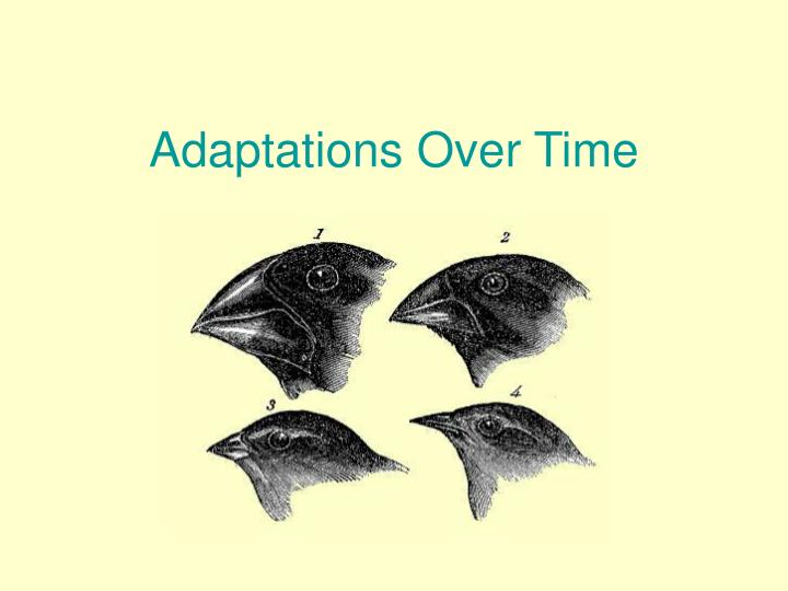 adaptations over time n.