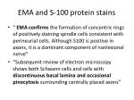 ema and s 100 protein stains