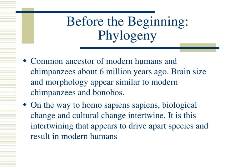Before the Beginning: Phylogeny