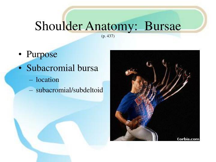 Shoulder Anatomy:  Bursae