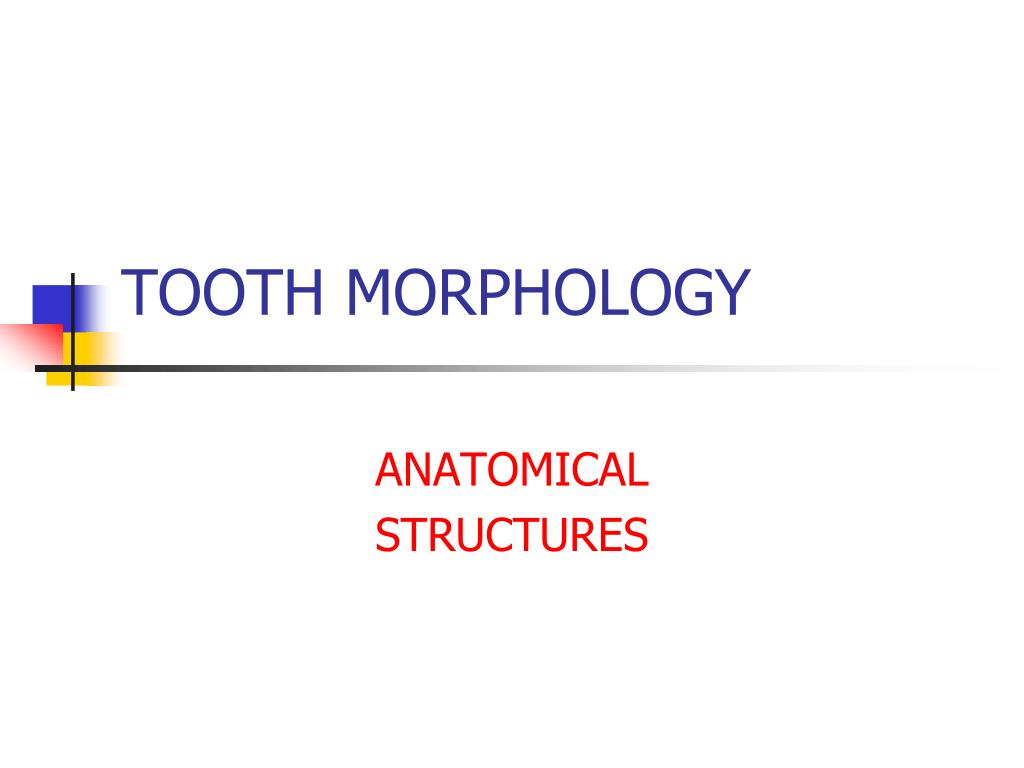 PPT - TOOTH MORPHOLOGY PowerPoint Presentation - ID:1265472